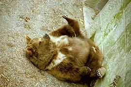 Bärengtraben